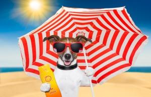 dog summer sunscreen